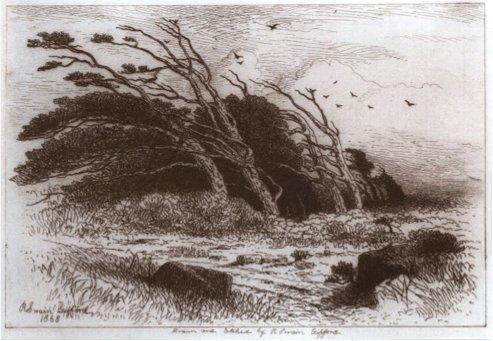 Robert Swain Gifford, Storm Beaten Cedars on Martha's Vineyard [etching, 1868]