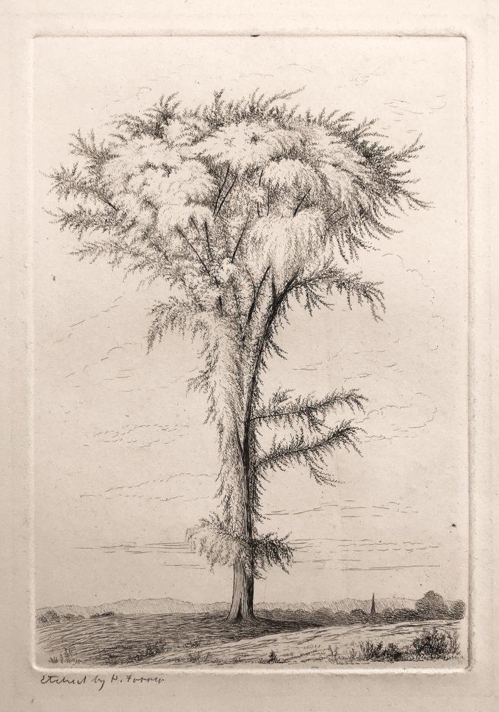 Henry Farrer, Tree Study [etching, circa 1870
