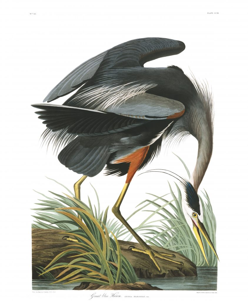 John James Audubon Great Blue Heron
